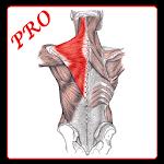 Anatomi Kas Sistemi PRO Icon