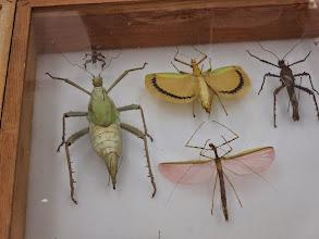 Photo: Bugs galore