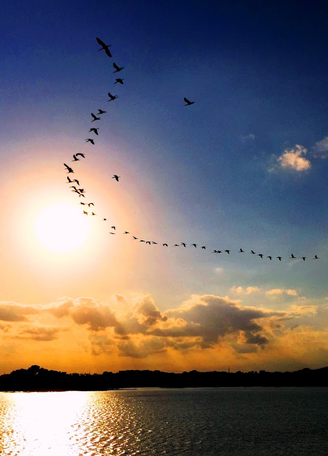 Flying High by Mike Hotovy - Animals Birds (  )