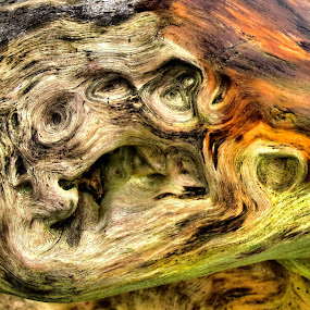 by Christopher Barker - Artistic Objects Other Objects ( driftwood, detail, new, 2013, wood, 2014, award5, fresh, qwas, quality, win, closeup )