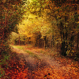 Autumn Walk LXVIII. by Zsolt Zsigmond - Landscapes Forests ( nature, tree, autumn, outdoors, forest, leaf, yellow )