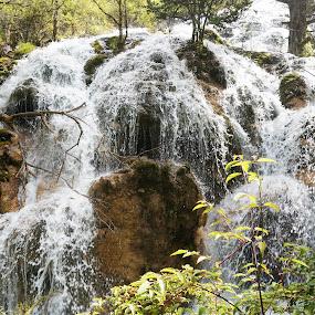 waterfall in Juizhago by Alice Chia - Landscapes Waterscapes ( water, tree, flowing, green, waterfall, rock, scading )