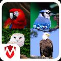 Download 60 Bird Sounds APK