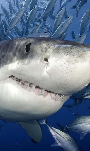 Lwp サメ