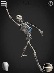 Skelly MOD (Cracked): Poseable Anatomy Model 9