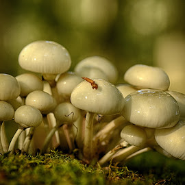 Close Together by Marco Bertamé - Nature Up Close Mushrooms & Fungi ( mushrooms, all together, fall, white, fungi, close together, crowded, wood, autumn, fotest, shrooms, many,  )