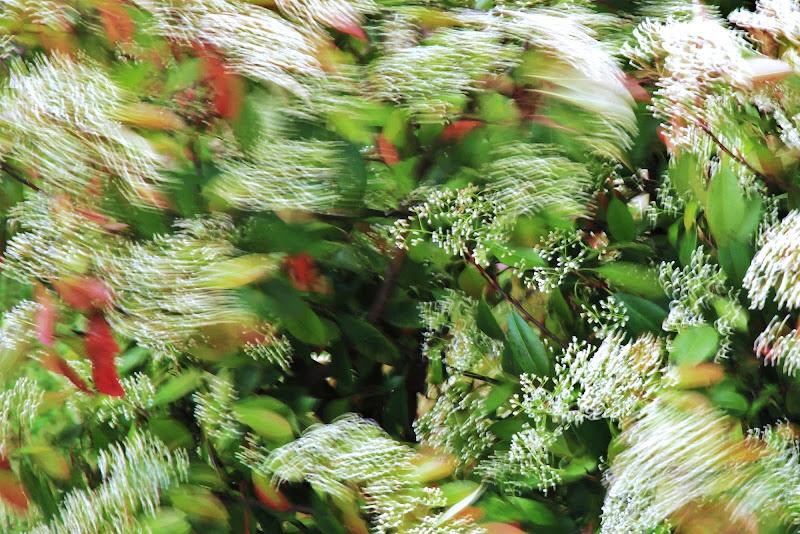La danza del vento... di ScrofaniRosaria