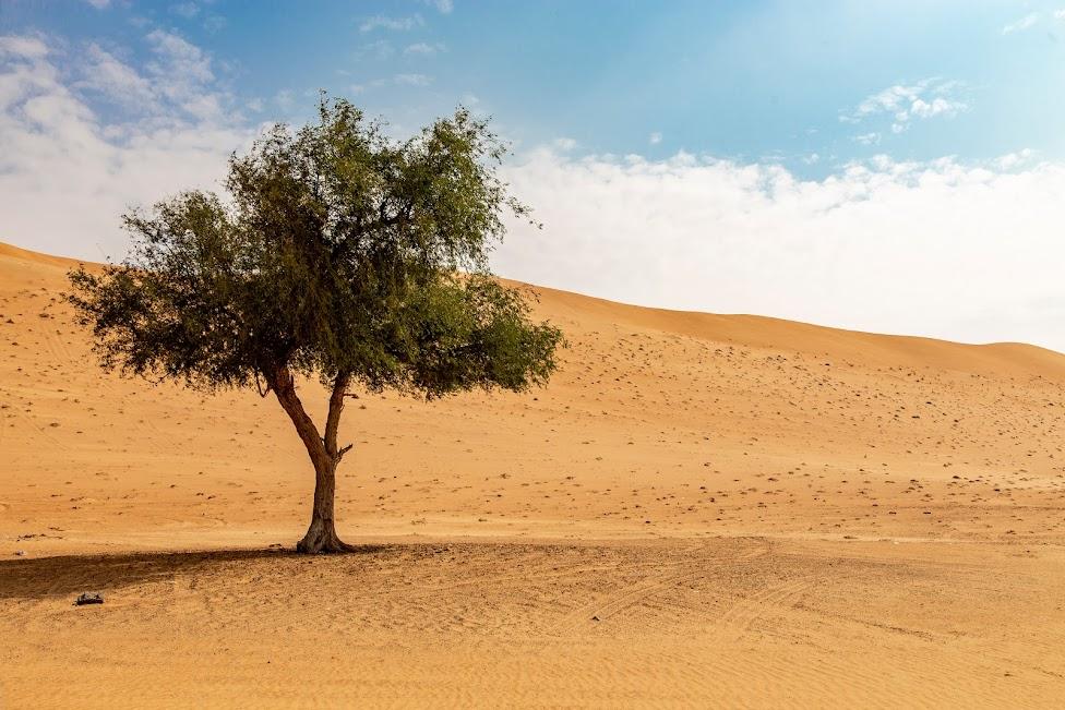 Wahiba Sands, Oman, pustynia, drzewo, samotne drzewo
