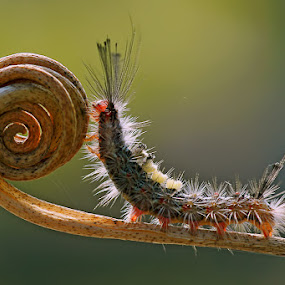 straighten out the spiral by Handri Fitrido - Animals Insects & Spiders