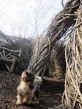 Photo: Dog in a woven labyrinth at Wegerzyn Garden in Dayton, Ohio.