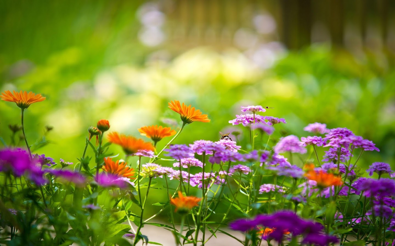 Wallpaper Taman Hidup Gambar Bunga Cantik Apl Android Di