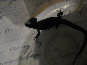 Photo: Вита была очень живой ящерицей, она не упускала случая порадоваться свету...