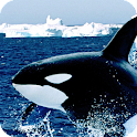 Orca Live Wallpaper Animal icon