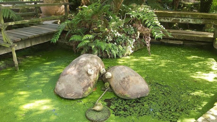 Foto Jardín botánico Fundación Sales 25