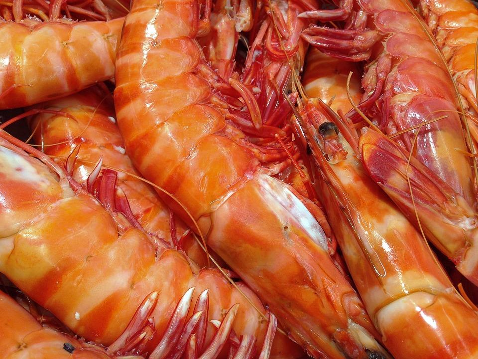 Shrimp - Free images on Pixabay