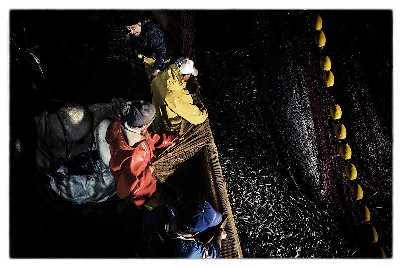 Pesca forza tira pescatore, pesca non ti fermare di FrancescoPaolo