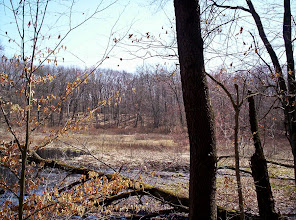 Photo: View from Waterloo-Pinckney Trail, south of Seymour Road, April 27th