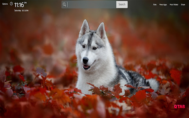 Husky Wallpapers HD Theme