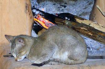 Photo: Ein Himalaya Kätzchen wärmt sich am Feuer