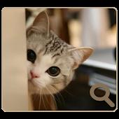 숨은고양이찾기