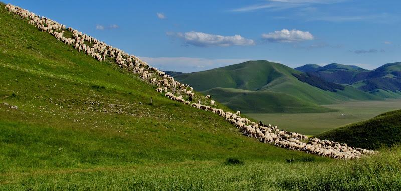 La collina delle pecore di Giorgio Lucca
