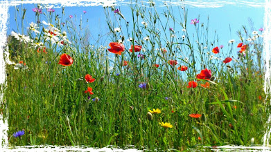 Photo: Summer daisies and poppies.