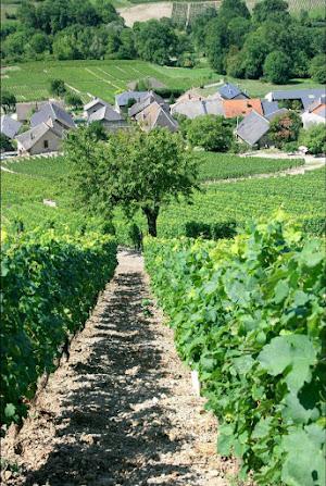 producteur-vins-savoie