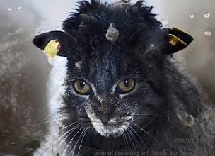 Photo: animal crossing wild world komplettlösung für frisuren aller art