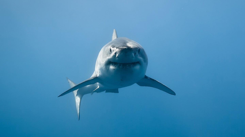 Watch Eyewitness Shark Attack live