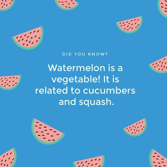Watermelon Factoid - Instagram Post Template