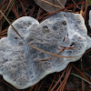 Tooth Fungus