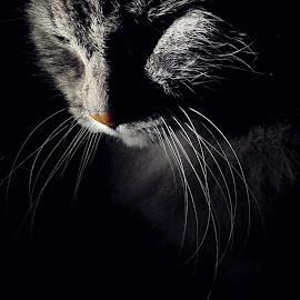 *** by Jurijs Ratanins - Instagram & Mobile Other ( mobilography, cat, whiskers, portrait, animal )