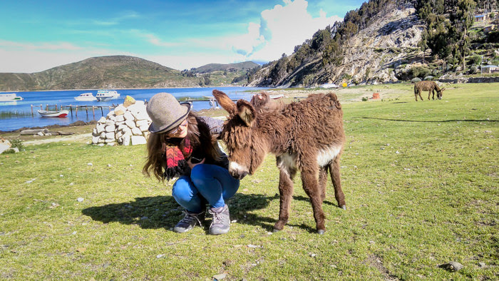 my friend befriending a donkey on isla del sol on lake titicaca while backpacking bolivia