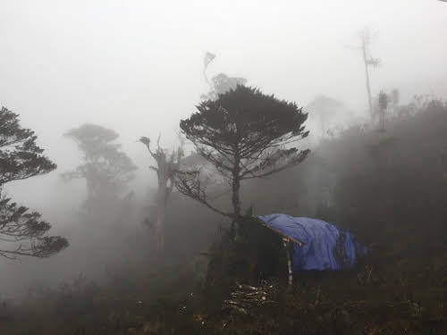 Indonesia. Papua Baliem Valley Trekking. A tarp is a must if you go through the jungle.