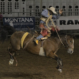 Bronc Rider by Darlene Neisess - Sports & Fitness Rodeo/Bull Riding ( cowboy, rider, animals, horses, action, sports, bronc riding, rodeo, western, bucking )