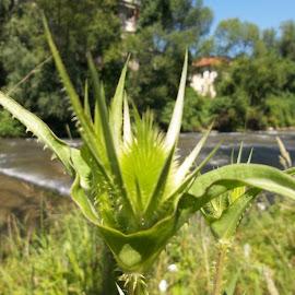 Ден by Georgi Kolev - Nature Up Close Leaves & Grasses ( небе., треви., слънце., река., дървета., сгради. )