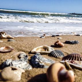 Sea shells at the sea shore  by Bryan Gruber - Landscapes Beaches ( sea shells, delaware )