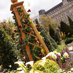 Flower garden on Trafalgar Square by Pavel Laberko - Nature Up Close Gardens & Produce ( sculpture, pwcflowergarden, london, trafalgar square )