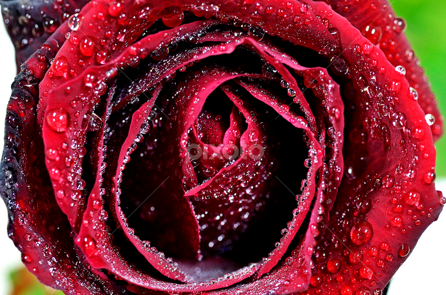 by Pete G. Flores - Nature Up Close Flowers - 2011-2013 ( World_is_RED )