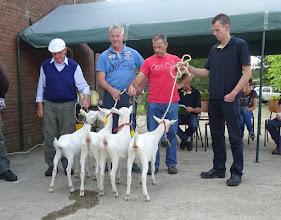 Photo: Rubriek 1: witte lammeren geboren in april. 1a. Marijke 3 vd Biezenwaard; 1b. Agnes 6; 2a. Malinda 1; 2b. Agnes 7.