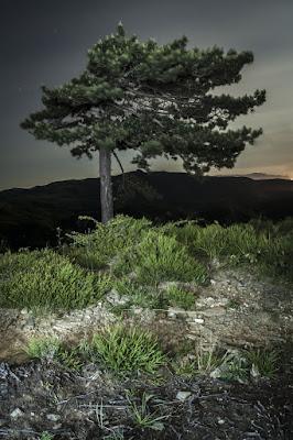 L'albero di Christian di zuepes