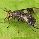 Horse-fly