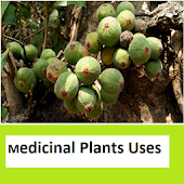 Medicinal plants Images n Uses