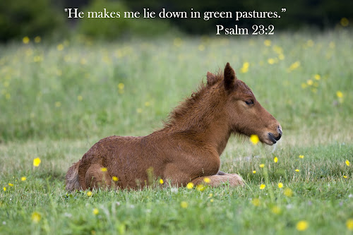 He makes me lie down in green pastures.  by Steven Faucette - Typography Captioned Photos ( psalms, grayson highlands, scripture, virginia, pasture, pony )