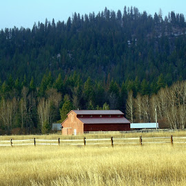 COUNTRY LIFE by Cynthia Dodd - Novices Only Landscapes ( countryside, field, barn, trees, fences, landscape, country )