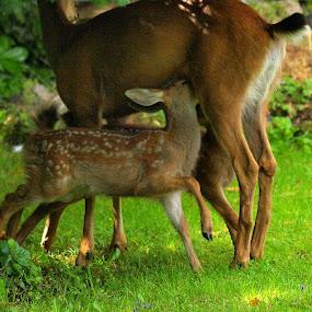 by Steve Kane - Animals Other Mammals