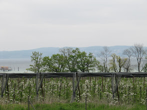 Photo: Day 34 - The Pear Orchards #2