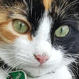 by Karen McGregor - Animals - Cats Portraits