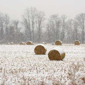 Hay Bales in the Snow by Svemir Brkic - Landscapes Prairies, Meadows & Fields ( hay, snow, meadow,  )