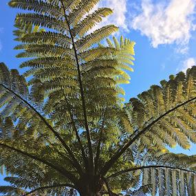 Fern by Martina Frnčová - Nature Up Close Trees & Bushes ( sky, fern, nature, tree, low angle,  )